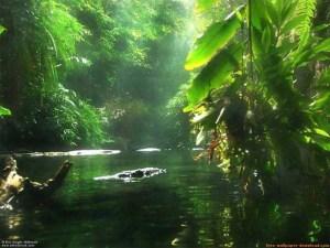 amazonas c